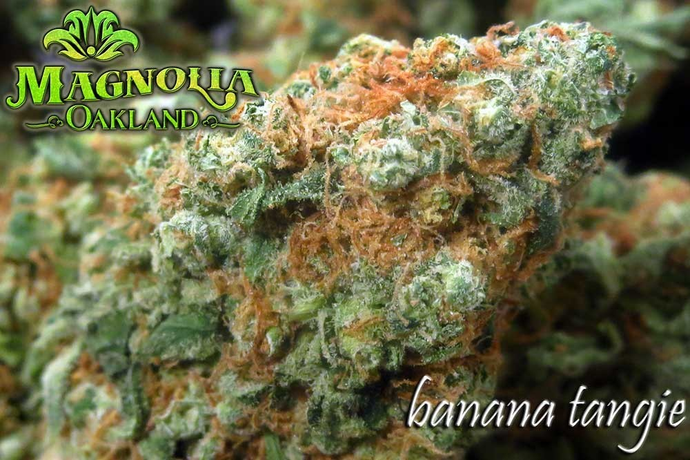 Image of Banana Tangie