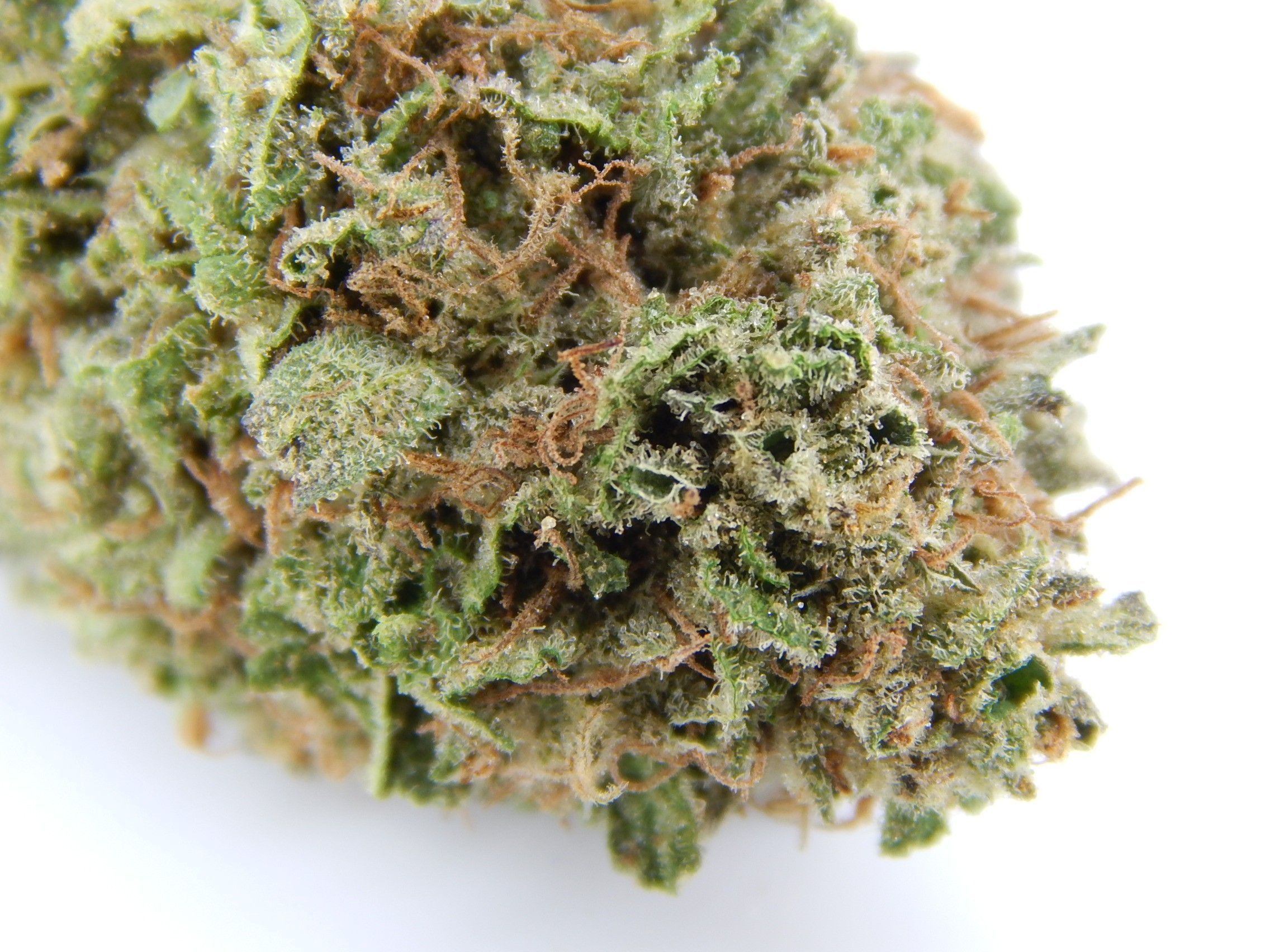 Image of Durban Cookies