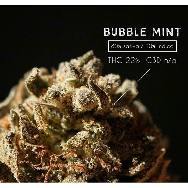 Image of Bubble Mint