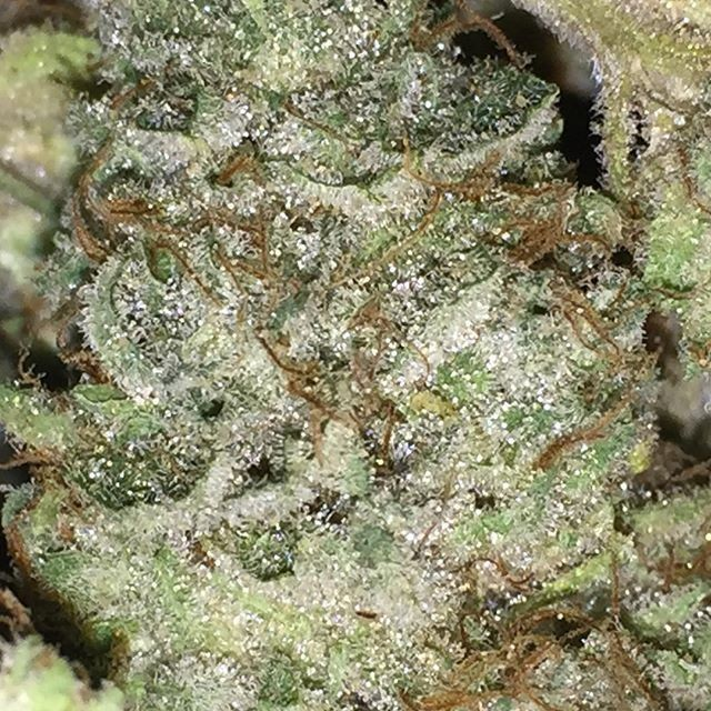 Image of Chem Bubba
