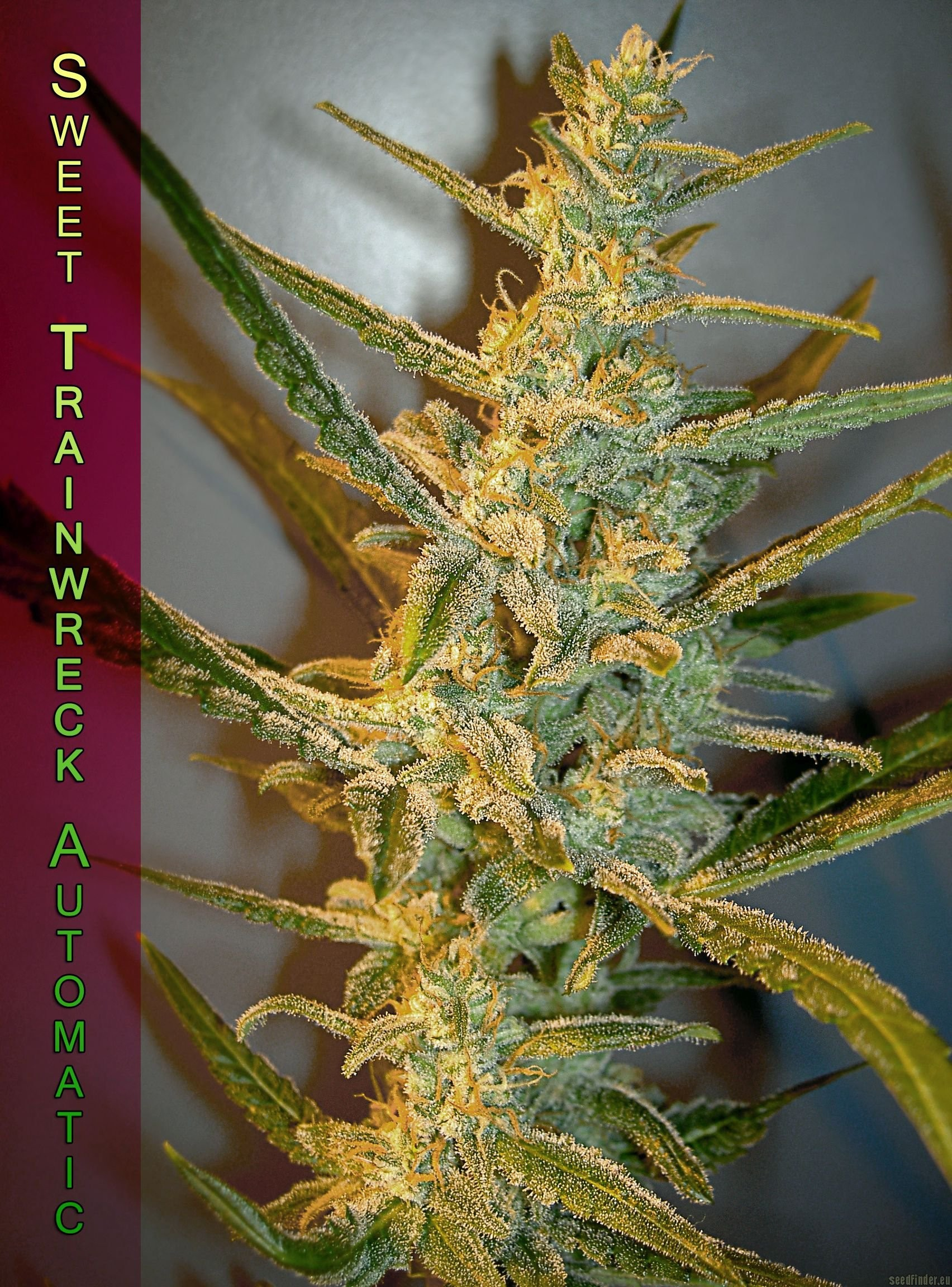 Image of Sweet Trainwreck