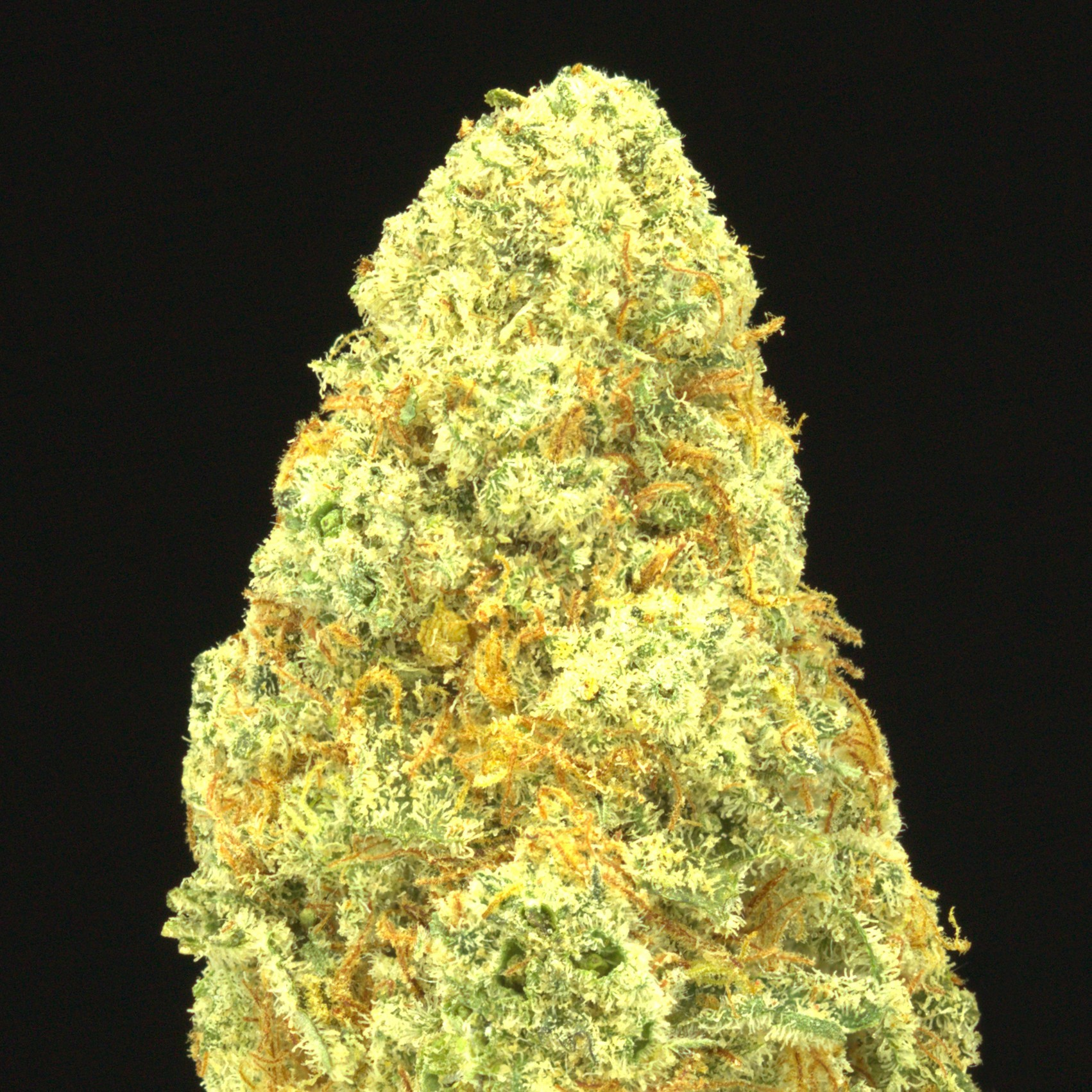 Image of Blueberry Chem