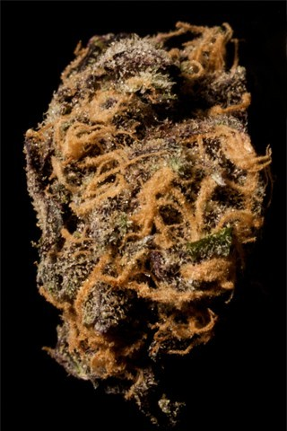 Image of Blackout Purp